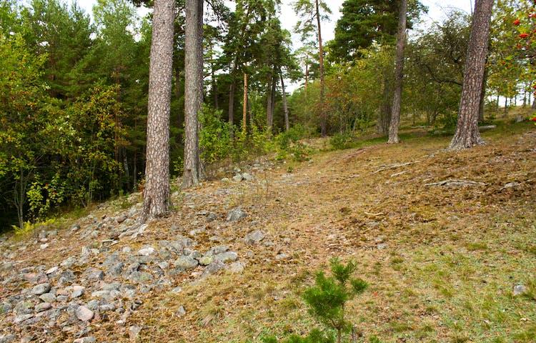 En brant lutande backe med många stenar och rötter. Flera träd och buskar växer på backen.