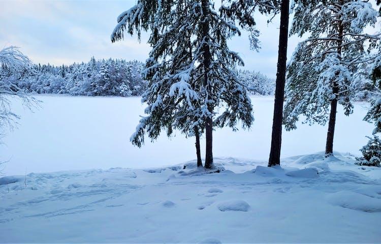 Januari i naturreservatet Trehörningsskogen. Foto: Alexandra Johansson