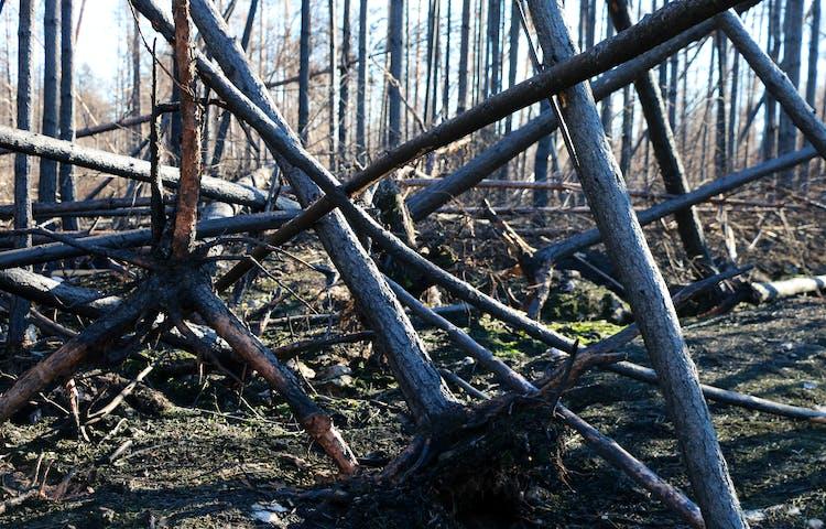 Rasade träd som ligger huller om buller.
