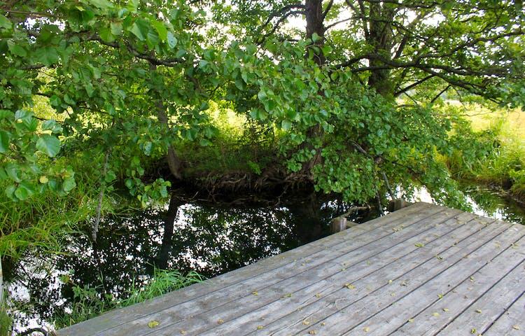 En träplattform utan kanter står vid en vattenkälla. Det är nära till vattnet från plattformen och runtomkring växer många träd.