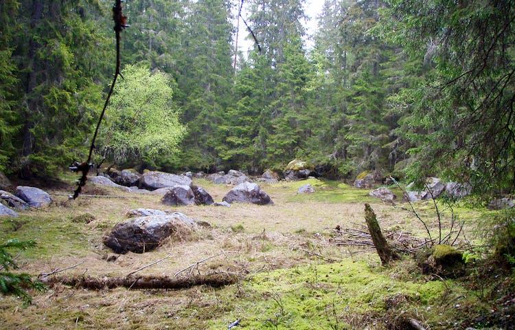 Skogsglänta med ett antal stenar mitt i.