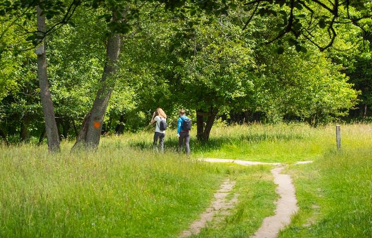 Två personer vandrar på en stig i en fäladsmark. Skog i bakgrunden.