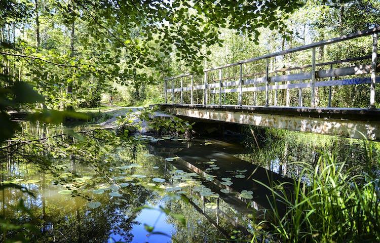 En bro över vattnet vid kärret i Brotorp