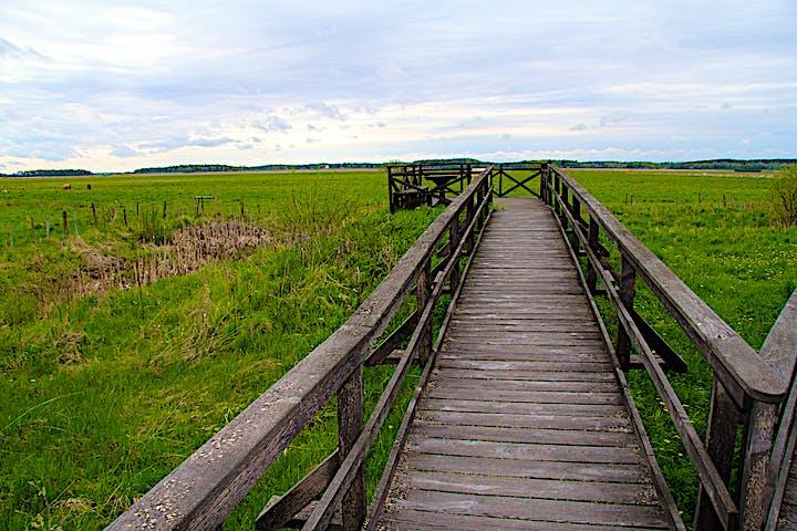 En lång träspång med staket leder ut till utkiksplattformen.