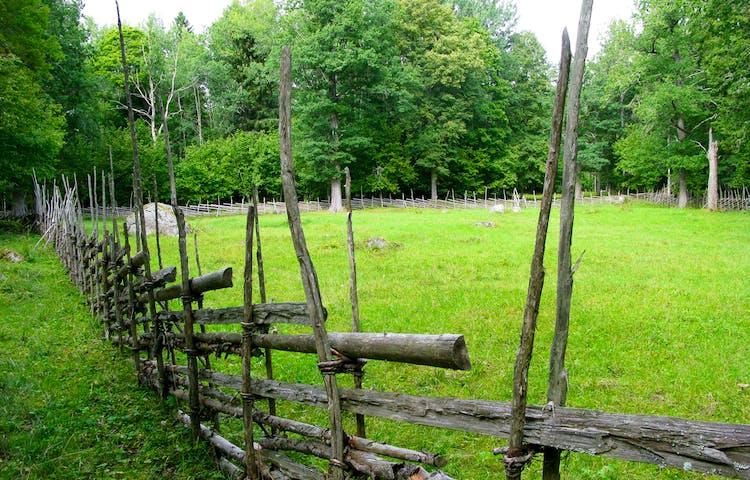 En gärdesgård står runt en äng. På ängen finns flera stora stenar och i bakgrunden växer många lövträd.