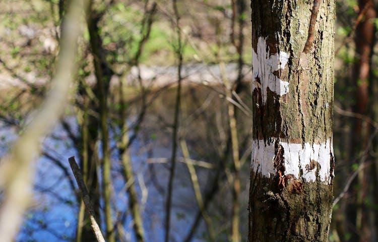 Ett vitmarkerat träd som visar att det är ett naturreservat.