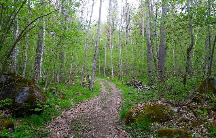 En bred och ojämn naturstig går genom lövskog. I förgrunden finns stenblock och en ledmarkering är målad på en trädstam.