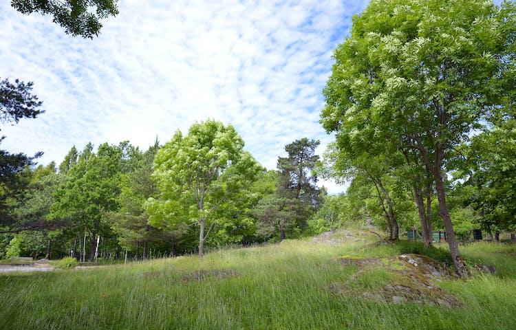 Ängsmarker med blå himmel. Foto: Johan Pontén