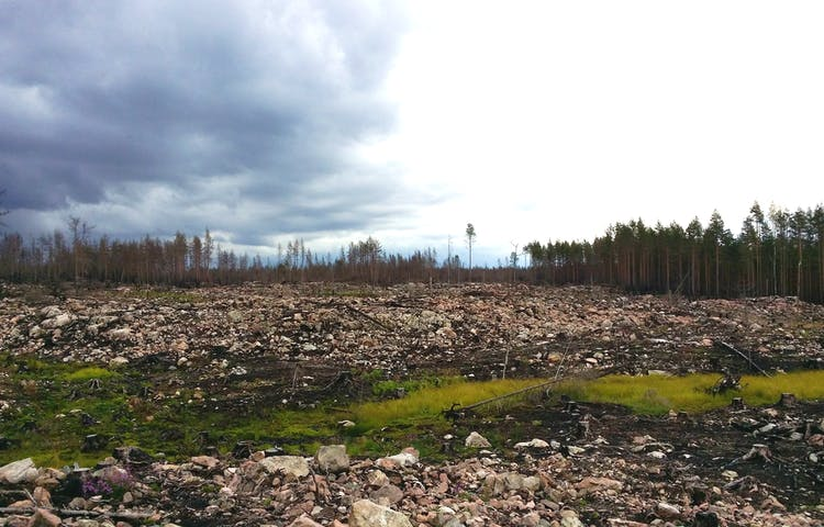Här startade branden 2014. Naturen är karg med ett myller av blottlagda stenar.