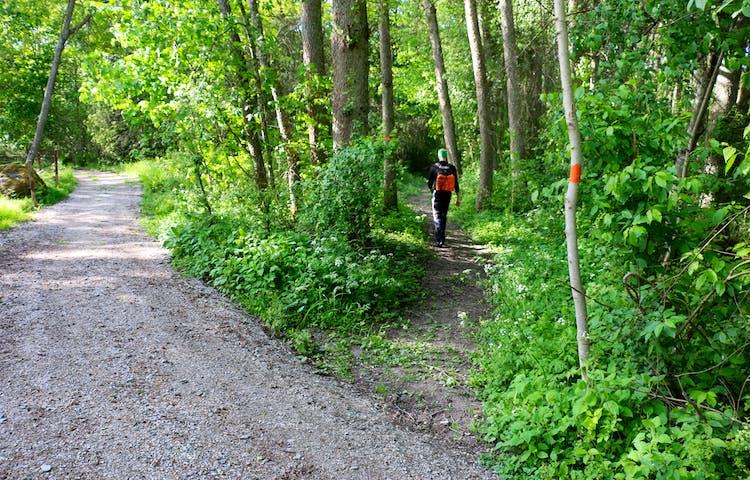 En person med ryggsäck går på en stig i skogen med orange ledmarkering. Stigen går in i skogen från en grusväg.