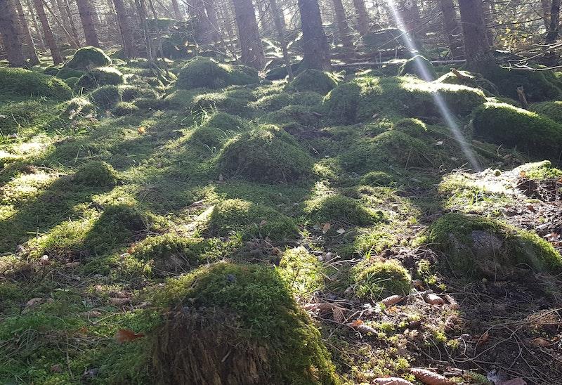 Björndalen - Möckelhult - Lermon, Tjustleden etapp 8