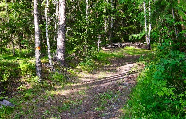 Träd med orange markering intill en bred stig.