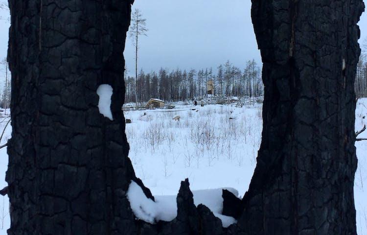 Utsiktstorn på avstånd i vintrigt landskap. I förgrunden en svartbränd trädstam.