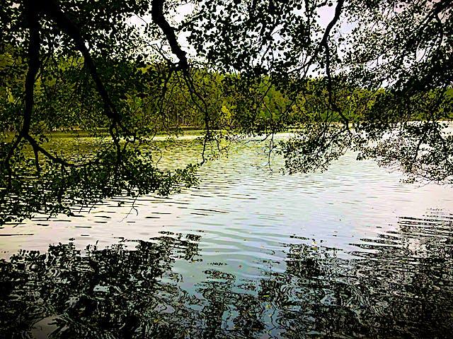 Trädgrenar som hänger över en klar vattenyta.