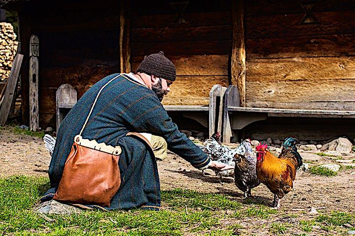 En man i historiska kläder matar hönor. Foto: Bo Svensson