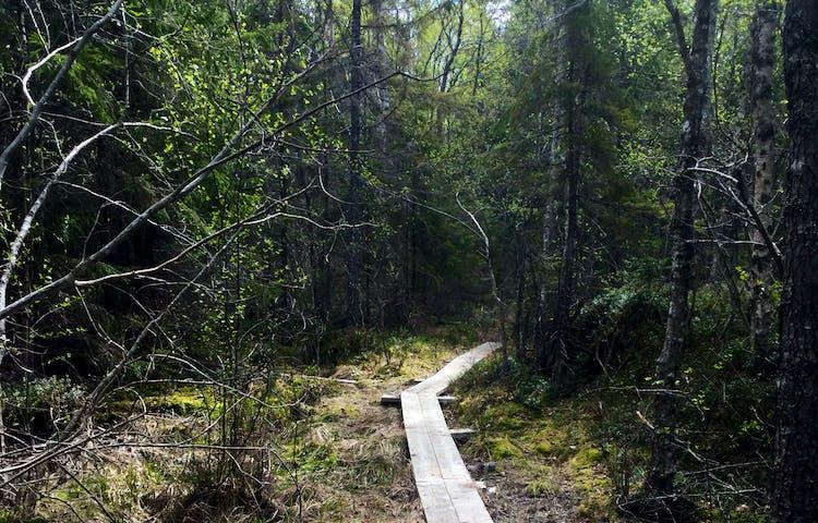 Vindlande led i Tullviksbäckens naturreservat. Foto: Länsstyrelsen Stockholm