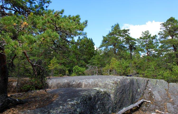 Kala klipphällar med branta kanter ligger bland tallar.