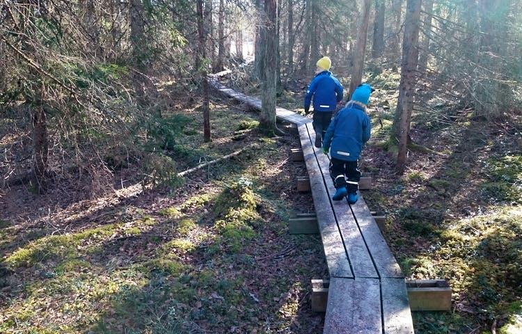 Två barn går på en spång i skogen.