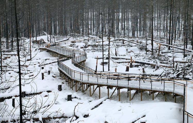 Ramp med staket som slingrar sig genom ett snötäckt landskap.