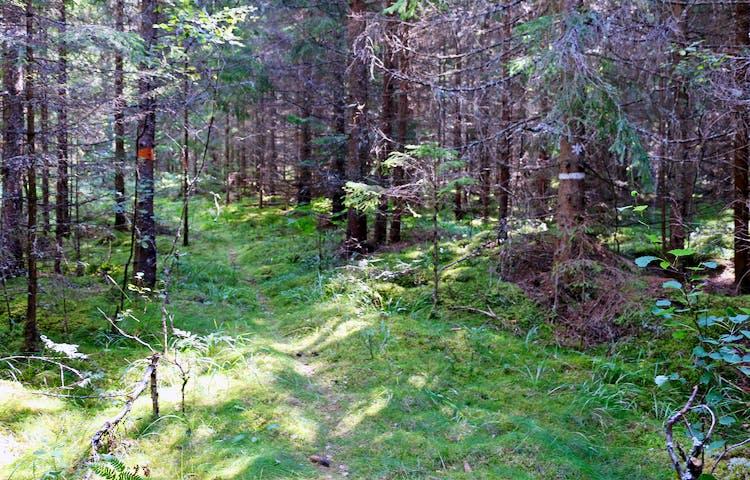 Stig, ledmarkeringar och reservatsgränsmarkering.