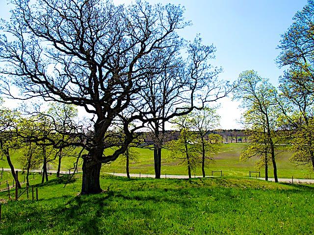 Ekar, Lovö naturreservat. Foto: Stefan Henriksson.