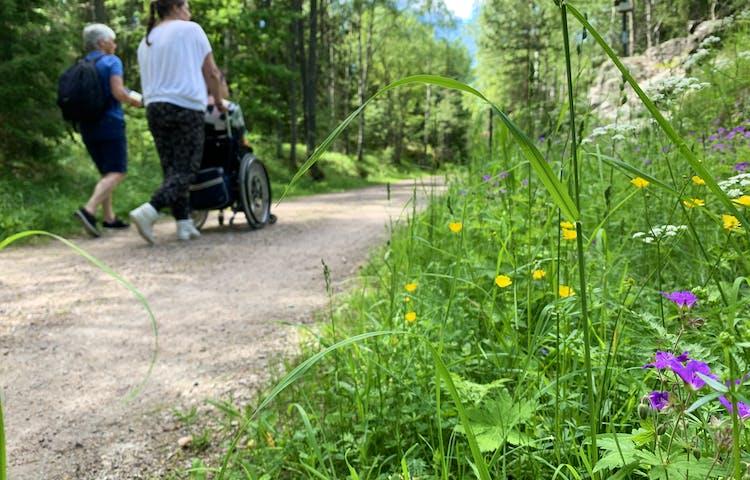 Tre personer vandrar på stigen, en av dem i rullstol. Sommarblommor i förgrunden.