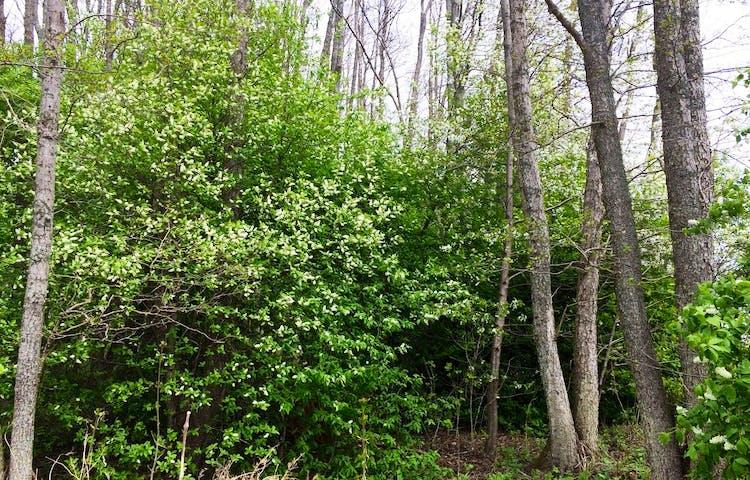 Buskage och trädstammar.