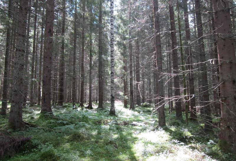 Foto: Ylva Norén