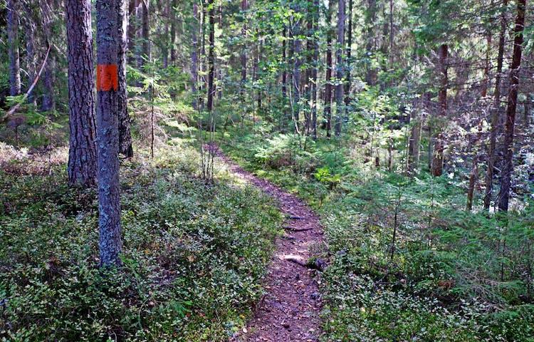 Orangemarkerat träd längs stigen visar vägen.