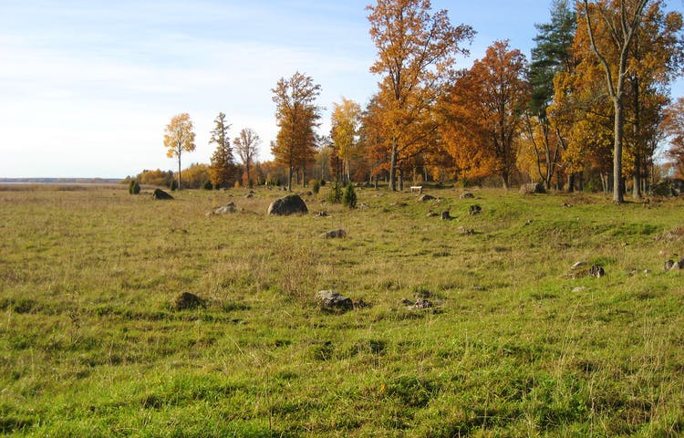 Öppen betad gräsyta med lövträd och större stenar utspridda över ytan.