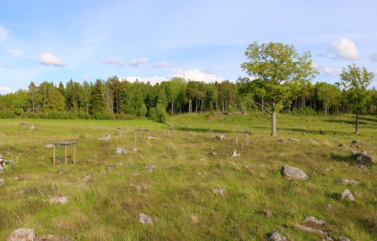 Ett öppet parti bestående av gräs och sten.
