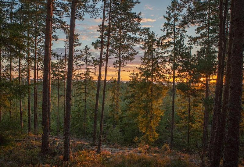 Värmande vandringspaket på Hamgården