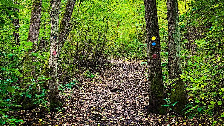Vandringsled med lövträd runt omkring.