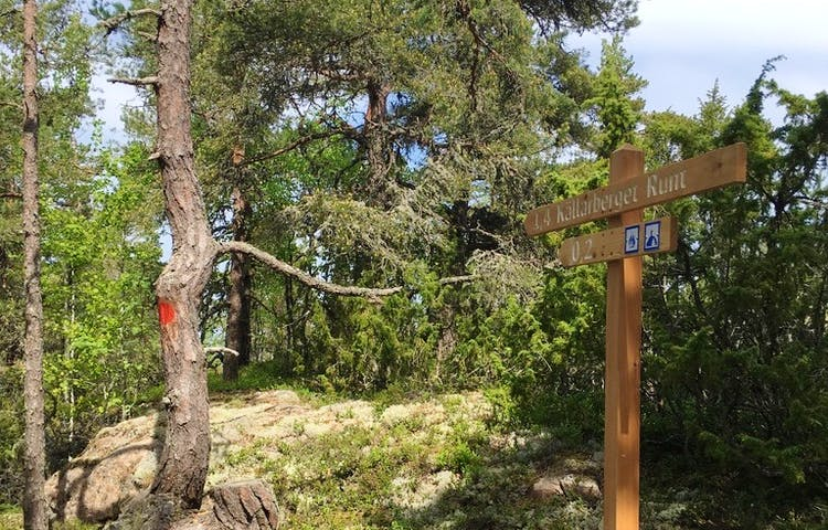 En hög stolpe med vägvisare står i skogen. En röd markering är målad på stammen av en tall.