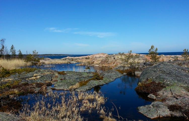 RönHällkar i Rönnskärs udde naturreservat. Foto: Josefin Sundbergnskärs udde naturreservat. Foto: Josefin Sundberg