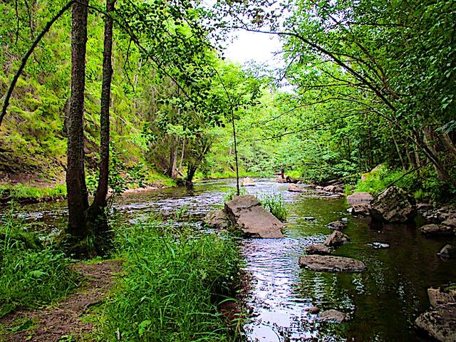 Hedströmmen leder fram mellan skog och stenar.