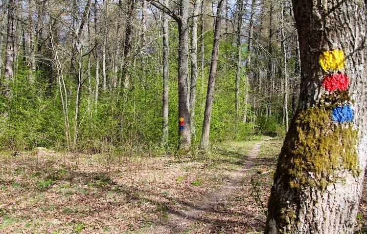 Stig i skogen med gul, röd och blå ledmarkering på träd.