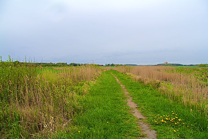 Smal stig mellan ängsmark.