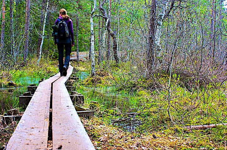 En kvinna med ryggsäck på ryggen går på en smal spång över våtmark. Runtomkring är det skog.