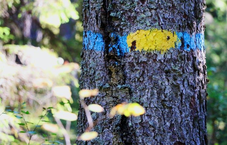 Träd med gul och blå markering.