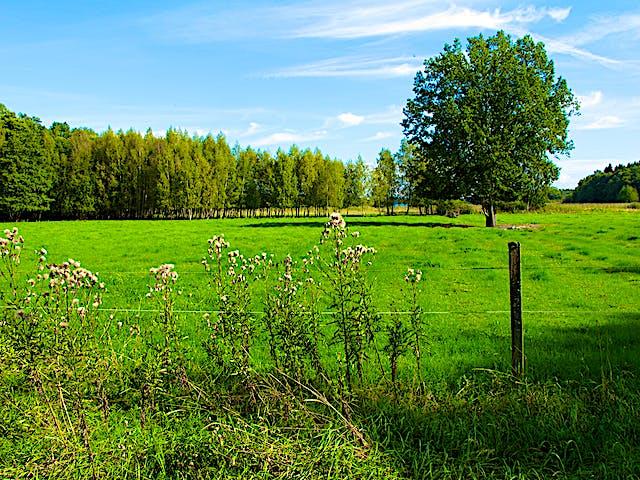 Lovö naturreservat. Foto: Björn Carlberg.