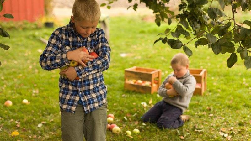 Askim Fruit and Berrypress