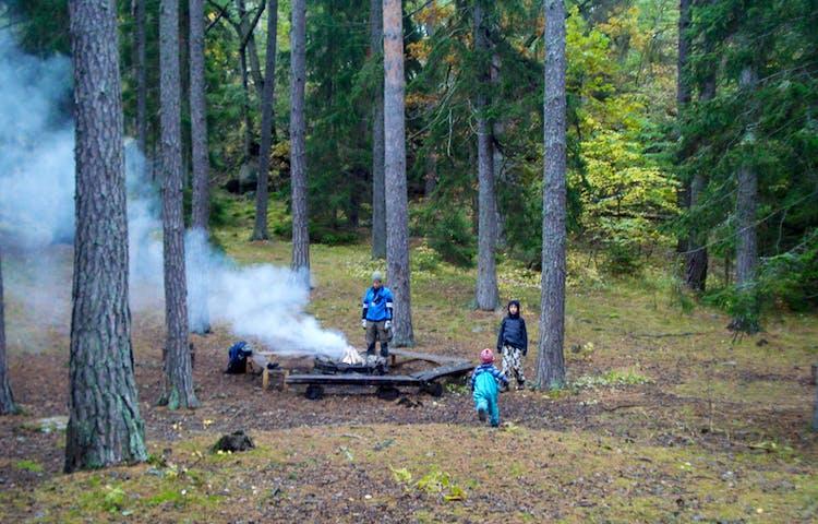 Barn står runt en rykande eldstad bland tallar.
