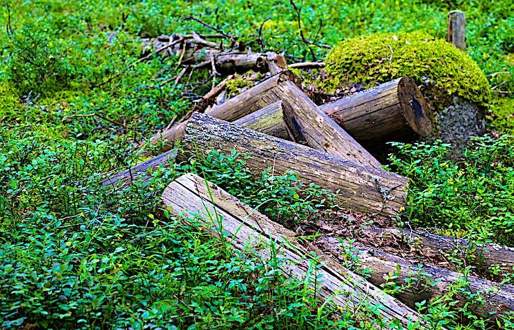 Uppsågade stockar ligger huller om buller.