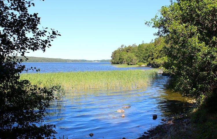 En vik vid Mälaren med mycket skog. Vattnet är lugnt och det växer mycket vass längre ut.