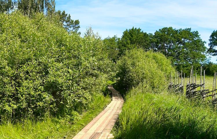 En fyra brädor bred spång bland grönt gräs och gröna buskar.