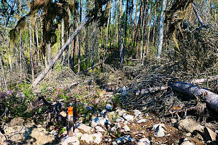 Knähög trästolpe med orange topp står i stening landskap med liggande döda träd.
