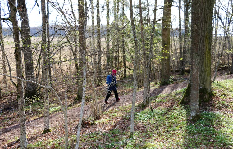 En person går på en stig med skog runtikring.