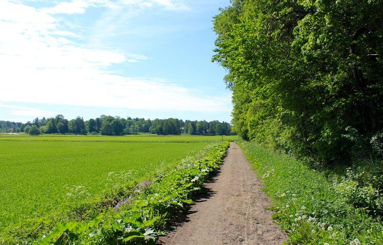 En platt och bred grusstig går mellan en skogsbryn och en åker.
