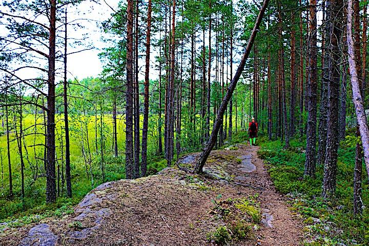 En person går på en stig. Intill stigen skymtas en myr.